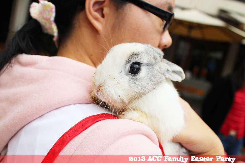 Rabbit From the Taiwan Homeless Bunny Protection Association at ACC Easter Party